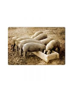 Pigs Behind, Home and Garden, Metal Sign, 18 X 12 Inches