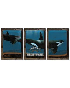 Killer Whale, Orca, METAL Triptych, Optional Rustic Wood Frame, Whale Watching, Wall Art, Ocean, Nautical